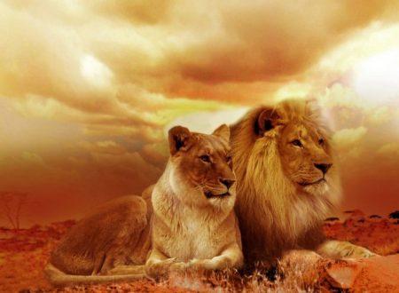 7 animali comuni e il loro significato nella nostra vita