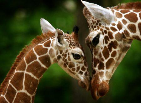 8 future madri del mondo animale