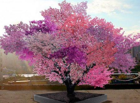 Questo albero magico produce 40 tipi diversi di frutta
