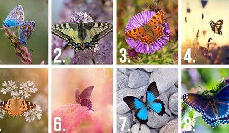 Scegli la farfalla più bella e scopri la tua personalità